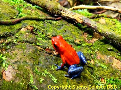 Photos de reptiles et d'amphibiens